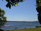 madrona_beach_rainier