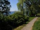 madrona_park_trail