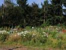 northgate_gardens