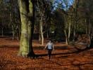 woodland_park