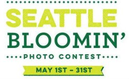 seattle-bloomin-small