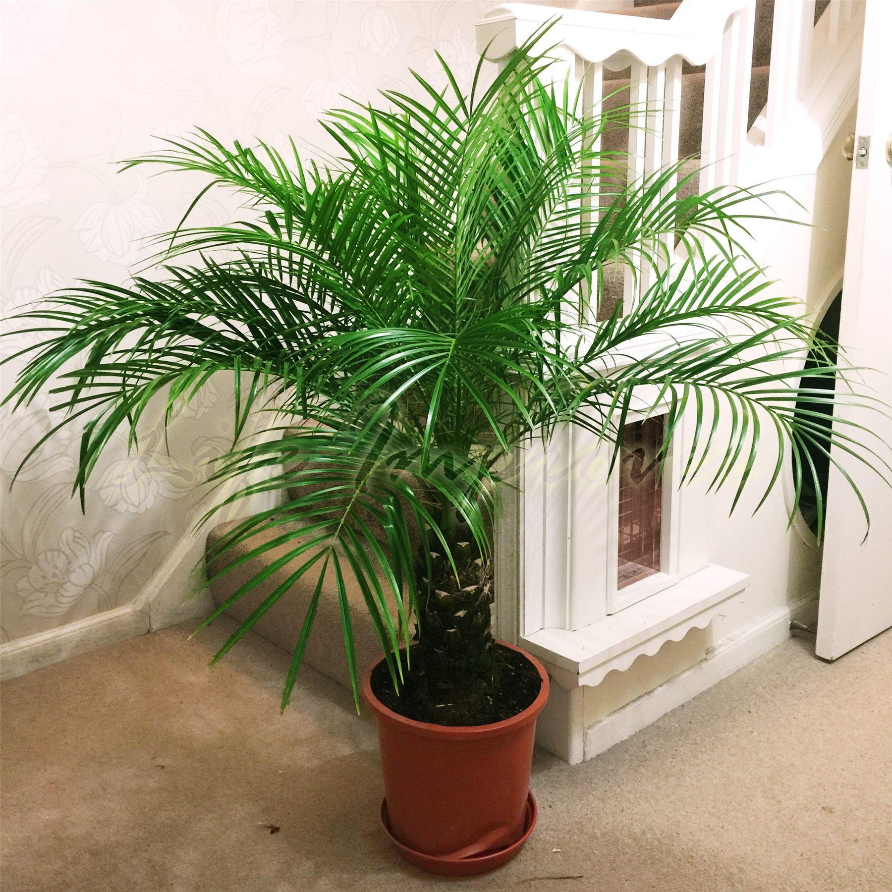Nasa Approved Houseplants For Fresher Air Part 1 Real
